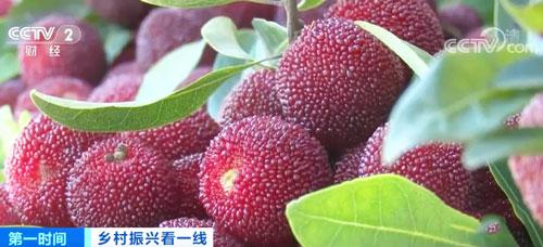 贵州剑河:千余亩时令水果丰收 村民生活红红火火